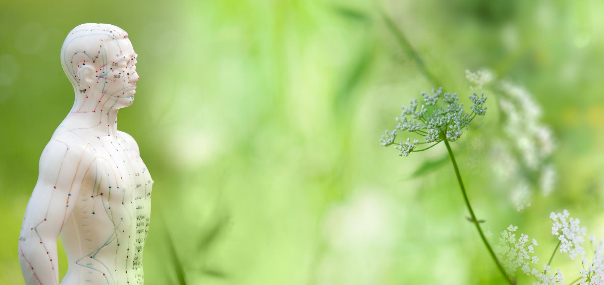 Akupunkturmodell im Grünen - Naturheilkunde