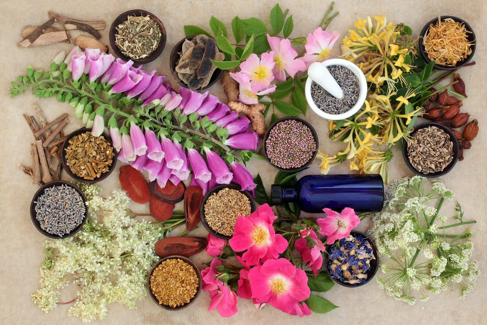 Naturheilkunde - Natürliche Kräuter- und Blumensammlung, die in alternativen Kräuterheilmitteln verwendet wird.